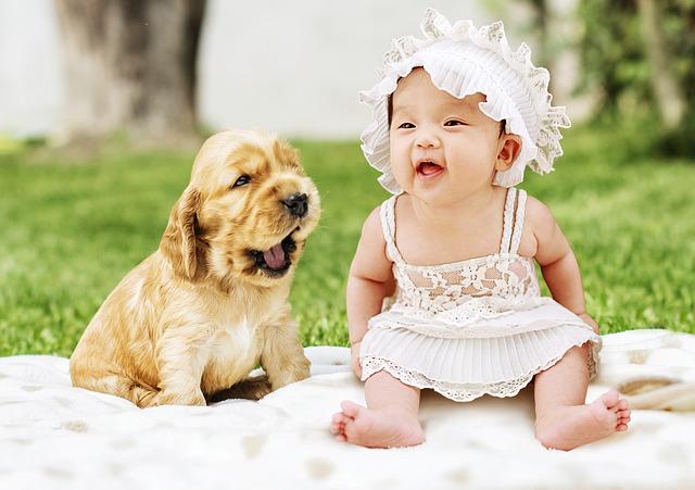 mimčo a štěně